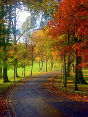 Road to Seaton Park (Northern_Night_Sky) Tags: road park autumn scotland aberdeen ~ szkocja droga jesie seatonpark naturesfinest amazingtalent anawesomeshot aplusphoto ultimateshot superbmasterpiece diamondclassphotographer ~vivid~ colourartaward vividmasters thegoldenmermaid thegoldendreams