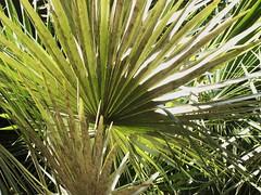 ortobotanico 048 (blum1) Tags: alberi fiori piante ortobotanico