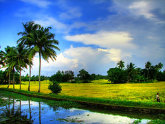 Colors of Kerala (plsssnraju) Tags: india nature water colors reflections landscape evening bluesky palmtrees fields backwaters backwater kumarakom naturesfinest greenfields naturecolors kelara mywinners anawesomeshot aplusphoto beautyofkerala backwatertrip