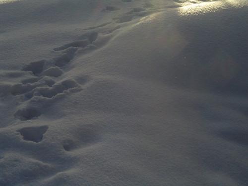 dark snow path