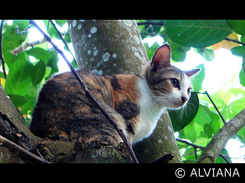 Cat on a Nangka Tree