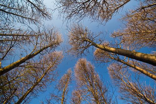 樹木│樹木│無料写真素材
