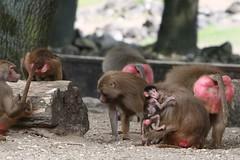 IMG_4930_emmen (Arie van Tilborg) Tags: zoo dieren emmen noorderdierenpark dierentuin mediacollege arievantilborg