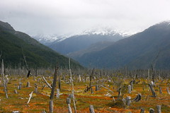PATAGONIA, CHILE: signs of deforestation (thejourney1972 (South America addicted)) Tags: chile patagonia del america amrica do south du sur amerika patagonie enviromental sul devastation sud zuid sudamerica deforestation suramerica enviroment aysn devastao sudamrica suramrica ambiental aisen patagonien desmatamento amerique devastacion devastacin sudamerique