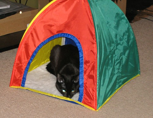 Shasta in Her New Tent