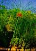 Verdinha (Lú Lαcєrdα) Tags: green nature riodejaneiro rj cidademaravilhosa natureza jardimbotânico cathycolors verdinha dsch7 araquem deflickrverde