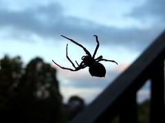 big spider 1