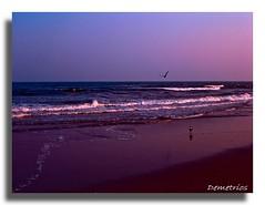 Here In Eternity (D2 Photography) Tags: ocean life sunset usa seagulls nature water newjersey bravo sony unitedstatesofamerica atlantic explore shore oceancitynj atlanticocean eastcoast wowiekazowie diamondclassphotographer flickrdiamond