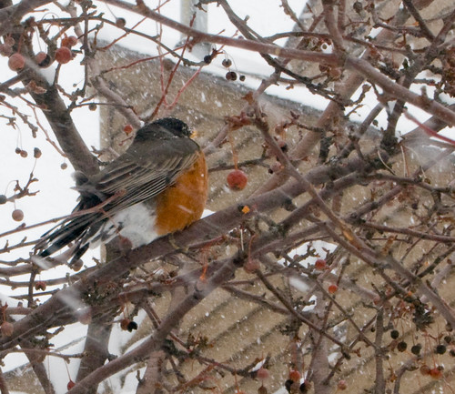 Crazy Robin
