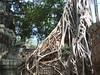 Ta Prohm - Tomb Raider Tree - the …