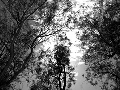 Boyce Thompson Arboretum (kevin dooley) Tags: trees arizona sky bw favorite southwest beautiful up wow interesting fantastic flickr pretty looking desert very good gorgeous awesome award superior arboretum super best most winner stunning excellent much incredible thompson breathtaking exciting boyce boycethompsonarboretum phenomenal