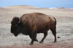 iowaIMG_0080 Custer National Park
