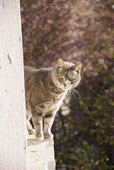 Jinx (Kate217) Tags: cat jinx