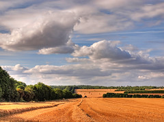 The Fields Near Winchester