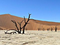 Deadvlei (life outside the fish bowl) Tags: africa blue sky sand desert dune salt bluesky namibia sossusvlei namib bigdaddy deadtrees saltpan deadvlei namibdesert mygearandme mygearandmepremium mygearandmebronze darrenfarmer lifeoutsidethefishbowl