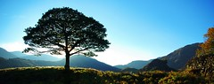 lakeland tree (alternativefocus) Tags: sunset tree pentax lakedistrict bluesky cumbria lakeland pentaxk10d impressedbeauty alternativefocus