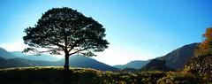 lakeland tree (alternativefocus) Tags: sunset tree pentax lakedistrict bluesky cumbria lakeland pentaxk10d impressedbeauty alternativefocus