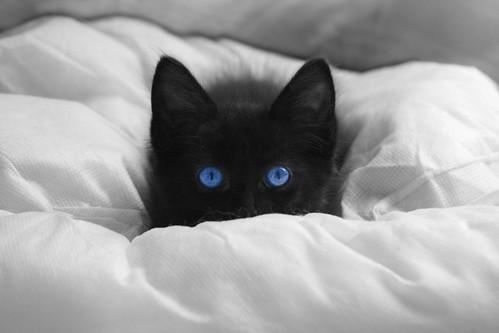 Cat Under Blanket Gif