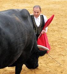 El Toro (melepix) Tags: travel spain culture feria bull andalucia bullfight toro mijas salvadorsanchesculture