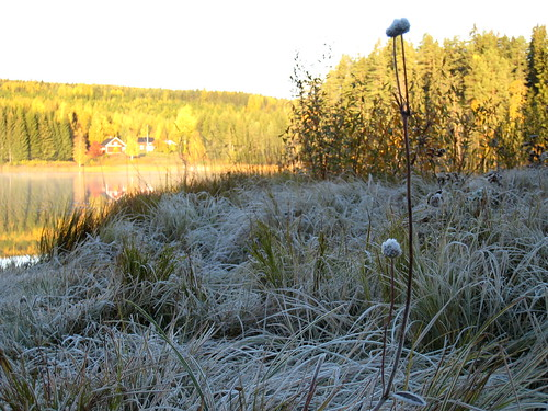 white frost & sun