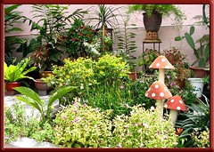 Our frontyard in September 2004. Can you spot the sunny faces of Butter Daisy?
