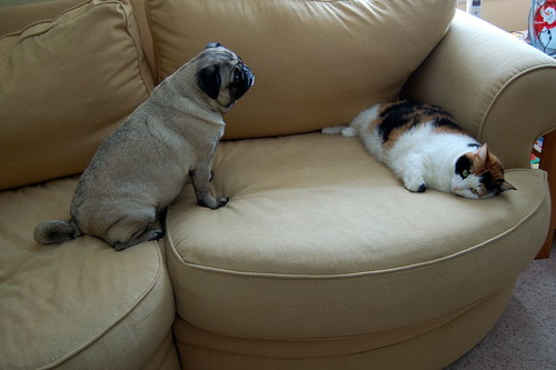 Pug and Cat by Blumie the Koala