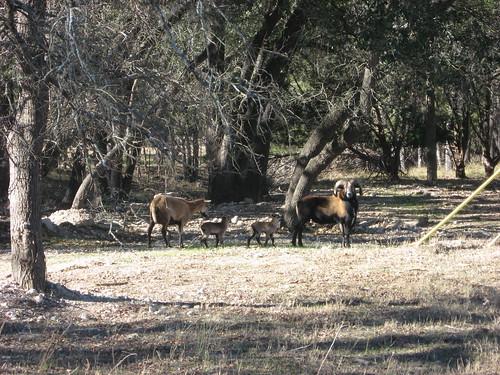 Lambs born Dec 19