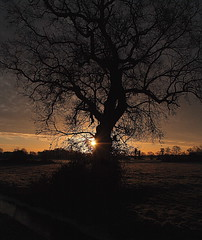 Tree Silhouette (torimages) Tags: uk morning winter light england orange cold water sunrise early frozen frost britain great somerset sd really levels allrightsreserved impressedbeauty naturessilhouettes llovemypic donotusewithoutwrittenconsent copyrighttorimages