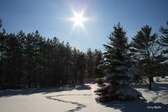 Winter In Ohio (TheCount88) Tags: winter snow nature flickr soe bestnaturetnc07 thecount88 garybydlo