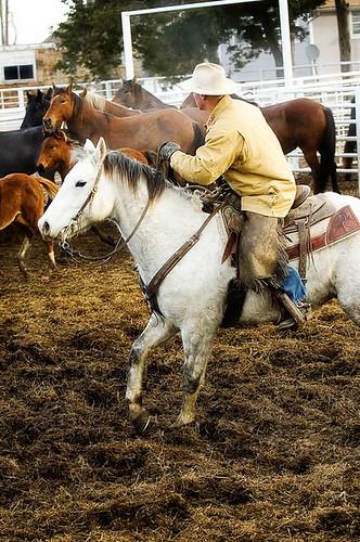 gathering mares 212
