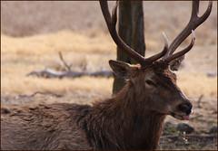 Tongue (TPorter2006) Tags: smile animal texas wildlife january medal 2008 glenrose fossilrim photofaceoffwinner pfogold tporter2006