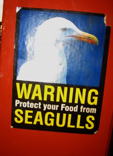 Serious Gulls They Have Here in Vancouver
