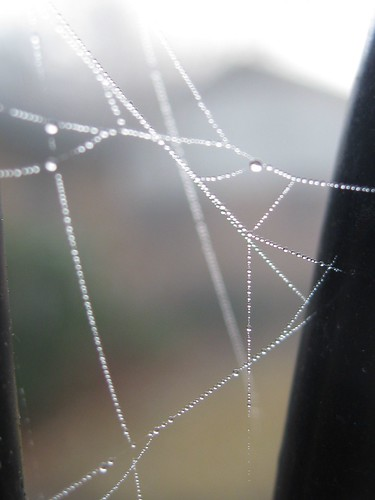 Foggy Spiderweb