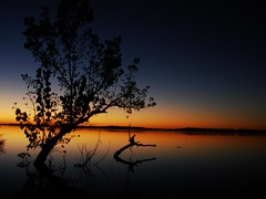 Navarro-Siempre el mismo rbol (Marina-BsAs) Tags: argentina buenosaires navarro laguna mywinners