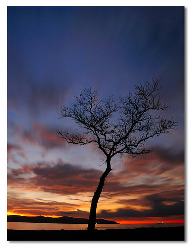 Single Tree (Vertical)