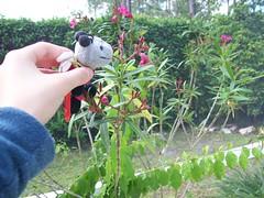 http://farm3.static.flickr.com/2183/2373421025_da6932e29e_m.jpg