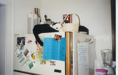 Adolph on Fridge, 1998
