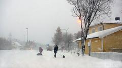 Dog walking in the blizzard Lofoten style :p (lunaryuna) Tags: norway northernnorway lofoten lofotenislands lofotenarchipelago grafdal blizzard weather funny dogwalker rebellingdogs winter season seasonalbeauty aboutmenanddogs pets lunaryuna