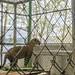Jaguar Gamboa Wildlife Rescue pandemonio 2017 - 03