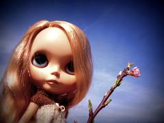The Apple Tree Flower