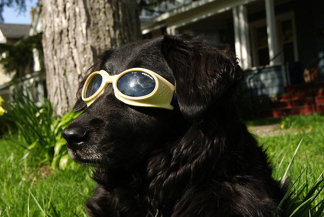 doggles10