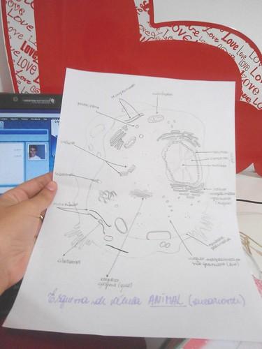 celula animal y celula vegetal. celula animal y sus partes; celula animal y celula vegetal. esquema de