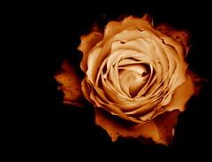 Rose (annicariad) Tags: autumn wales searchthebest cymru wfc naturesfinest impressedbeauty annicariad welshflickrcymru diamondclassphotographer