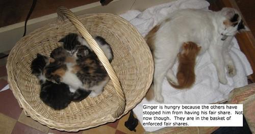 John Hemming's kittens