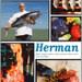 dolle koe bij Herman