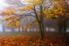 Return To The Magic Forrest (BarneyF) Tags: park autumn color tree fog liverpool forrest orton sefton platinumphoto superhearts