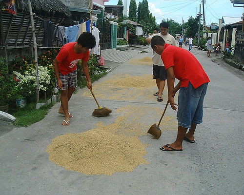 Pinoy Filipino Pilipino Buhay  people pictures photos life Philippinen  菲律宾  菲律賓  필리핀(공화국) Philippines palay rural rice drying pampanga road street