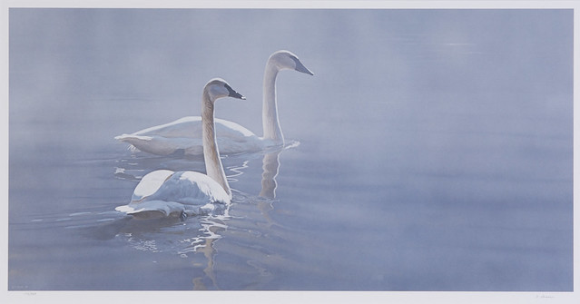 2011 - Light and Mist - Trumpeter Swans by alaskapublic