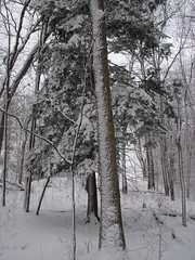 Standing Tall... (ccindigirard) Tags: winter nature vob mywinners mywinner abigfave platinumphoto impressedbeauty diamondclassphotographer flickrdiamond picturepages naturewatcher bestofautumnandwinter2007