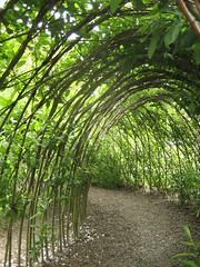 catepillar tunnel in children's garden Eden Project (AGA~mum) Tags: cornwall edenproject fences tunnel arbor willow 200views childrensgarden pleachedtrees ukcotedazur2007